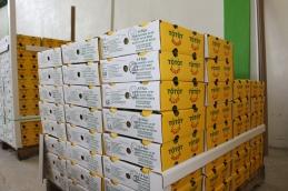 Ready to Ship Mangoes